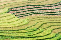 Terraced rice fields at Tu Le valley, Mu Cang Chai Stock Image