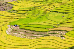 Terraced rice fields in Vietnam Royalty Free Stock Photos