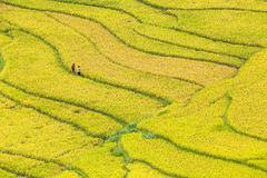 Terraced rice fields in Vietnam Royalty Free Stock Photography