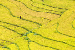 Terraced rice fields in Vietnam Stock Images
