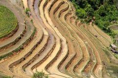 Terraced rice fields in Vietnam Royalty Free Stock Image