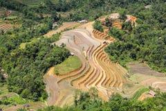 Terraced rice fields in Vietnam Royalty Free Stock Photos
