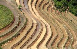 Terraced rice fields in Vietnam Royalty Free Stock Photo