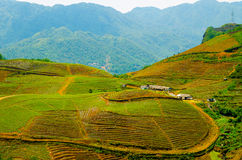 Terraced rice fields in Vietnam. Stock Photography