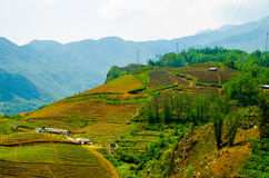 Terraced rice fields in Vietnam. Southeast asia beauty Stock Image