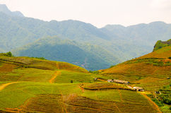 Terraced rice fields in Vietnam. Southeast asia beauty Royalty Free Stock Images