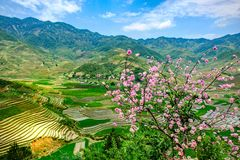 Terraced rice fields in Vietnam. YEN BAI- VIETNAM: Landscape of rice terraced field during the season to prepare new seeding rice in Tu Le, Yen Bai province stock images