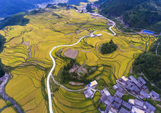 The terraced rice fields & the village Royalty Free Stock Photography