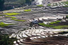 Terraced rice fields with water and houses on stil Royalty Free Stock Photography