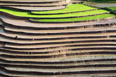 Terraced rice fields with water in Mu Cang Chai Stock Photography