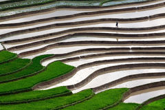 Terraced rice fields with water in Mu Cang Chai Royalty Free Stock Image