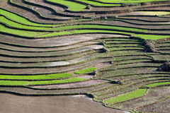 Terraced rice fields with water in Sapa Royalty Free Stock Photography