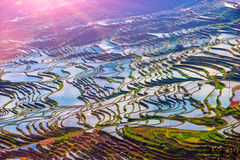 Terraced Rice Fields in Water Season in South China at Sunset Royalty Free Stock Photography