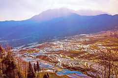 Terraced Rice Fields in Water Season in South China at Sunset Royalty Free Stock Image