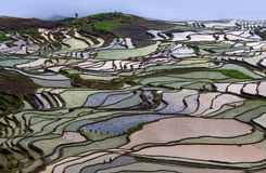 Terraced rice fields in water season in Yunnan province, China. Royalty Free Stock Photography