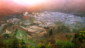 Terraced rice fields in Yuanyang. Stock Images