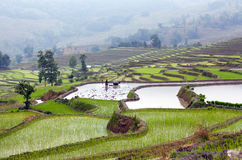 Terraced rice fields in Yuanyang county, Yunnan, China Royalty Free Stock Photography