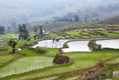 Terraced rice fields in Yuanyang, Yunnan, China Royalty Free Stock Images
