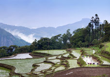 Terraced rice fields in Yuanyang, Yunnan Province, China Stock Photography