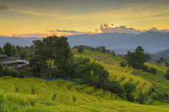 Terraced rice and homes  Chiang Mai Stock Images