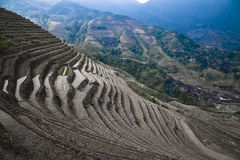 Terraced rice paddies. Details of terraced rice paddies on a steep mountainside, Guilin, China Stock Photos