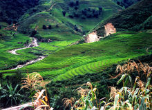 Terraced rice paddies Stock Photo