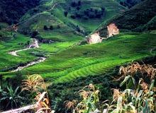 Terraced rice paddies. Rice paddies in the Phillipines Stock Photo