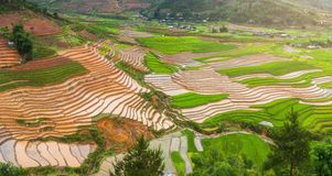 Terraced ricefield στην εποχή νερού στη MU Cang Chai, Βιετνάμ Στοκ εικόνα με δικαίωμα ελεύθερης χρήσης