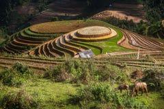 Terraced ricefield στην εποχή νερού στη MU Cang Chai, Βιετνάμ Στοκ Εικόνες