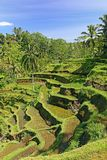 Terraced ricefield on Bali, Indonesia Stock Images