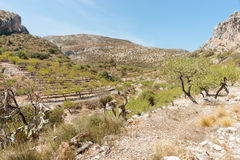Terraced slopes planted in almond trees, Castell de Castells, Sp Stock Photo