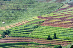 Terraced Vegetable Field Royalty Free Stock Image