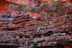 Terraced vegetation of Australian Kings Canyon. Vegetation growing on red sandstone terraces of Australian Kings Canyon. Watarrka National Park, Northern Stock Image