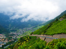 Terraced vineyard, Switzerland Stock Photo