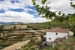 Terraced vineyards in Douro Valley Stock Photos