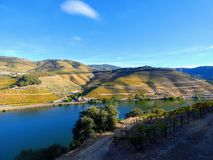 Terraced vineyards form the hillsides of Portugal`s Douro River valley stock image