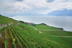 Terraced vineyards of Lavaux at Geneva Lake Royalty Free Stock Images