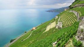 Terraced vineyards of Lavaux at Geneva Lake Stock Photos