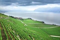 Terraced vineyards of Lavaux at Geneva Lake Stock Photo