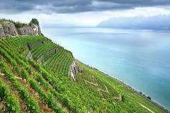 Terraced vineyards of Lavaux at Geneva Lake Stock Image
