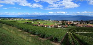 Terraced vineyards of Lavaux, Switzerland Royalty Free Stock Photos