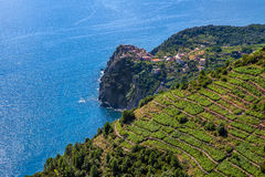 Terraced vineyards and Mediterranean sea in Italy. Stock Photography