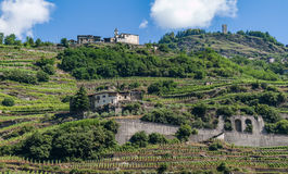 Terraced vineyards. Mountain viticulture in the terraced vineyards in Poggiridenti (Sondrio) on the Raethian side in Valtellina, Lombardy Italy stock photos