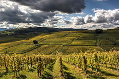 Terraced vineyards Royalty Free Stock Image
