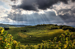 Terraced vineyards before the storm Stock Photography