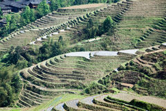 Terraces Stock Images