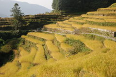 Terraces. The terraces are an ancient agricultural technique that permitted the exploitation of the mountain slopes grow and make them less accessible Stock Photos