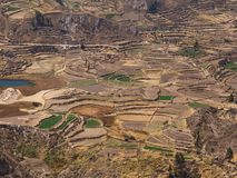 Terraces in Colca Canyon Royalty Free Stock Images