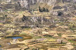 Terraces at the Colca Canyon Stock Photography