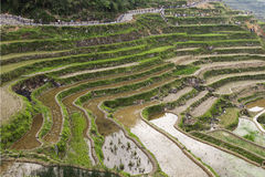 The terraces is filled with water, has attracted many people to leisure tourism Stock Photos